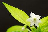 Bene fiore — Foto Stock