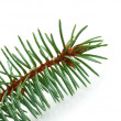 Pine tree branch — Stock Photo #4107767