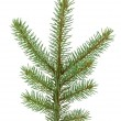 Pine tree branch — Stock Photo #4107793