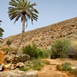 Stock Photo: Landscape with Palm Trees on Fuerteventura, Canary Islands, Spai