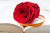 Rose and Book, a tradition in Catalonia — Stock Photo