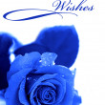 Blue rose isolated on white background — Stock Photo