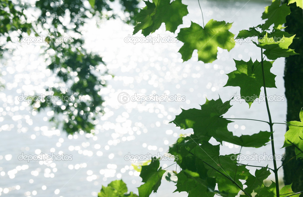 View on lake thru green leaves — Stock Photo #5197832