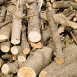 Logs — Stock Photo #4161865