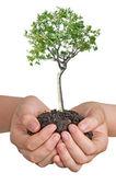 Arbre en mains comme un symbole de protection de la nature — Photo