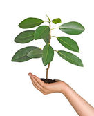 Sprout in palm as a symbol of nature protection — Stock Photo