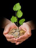 Dłonie z growng drzewo ze stosu monet — Zdjęcie stockowe