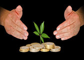 Hands protecting tree growing from pile of coins — Stockfoto
