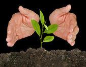 árvore protegida pelas mãos — Foto Stock