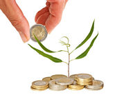 Tree growing from coins — Stock Photo