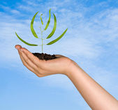 Sprout in palm as a symbol of nature protection — Stockfoto
