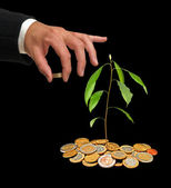 Avocado seedling growing from coins — Stock Photo