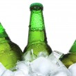 Bottles of beer are in ice — Stock Photo #4873526