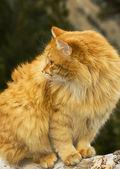 Pomarańczowy kot — Zdjęcie stockowe
