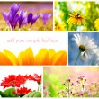 Stock Photo: Spring collage