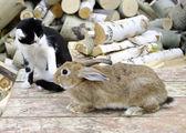 Gato y el conejo — Foto de Stock