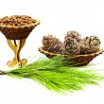 Walnuts and cedar cones — Stock Photo