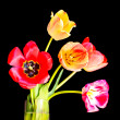 Tulips in vase on black - Stock Photo