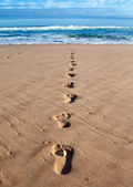 Footprints in wet sand in a line towards the sea — Stock Photo