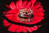 Reflet d'une fleur rouge dans une éclaboussure de goutte d'eau — Photo