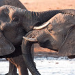 Two elephants greeting at waterhole - Stock Photo