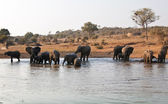 Elephant herd at waterhole in Africa — Stock Photo