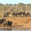 Stock Photo: Elephant herd walking past water hole