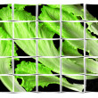 Lettuce leaves collage — Stock Photo #3955770