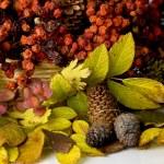Autumn colors — Stock Photo #4575551