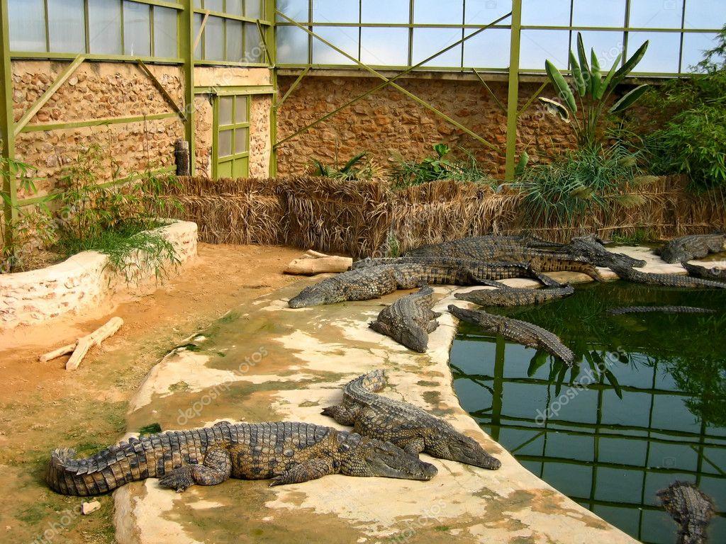 I coccodrilli nel padiglione di inverno nella fattoria for Piani di fattoria di 2000 piedi quadrati