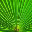 Palm leaf closeup green abstract background — Stock Photo #4226533