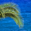 Blue sea and palm tree background — Stock Photo