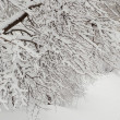 Bare snowbound tree — Stock Photo