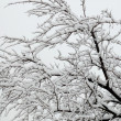 Bare snowbound tree - Stock Photo