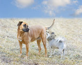 Dogs Getting Acquainted — Stock Photo