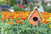 Bird House in Marigolds — Stock Photo