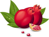 Pomegranate Fruit — Stock Vector