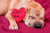 Valentin hund — Stockfoto