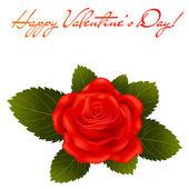 Rosa roja. San Valentín — Vector de stock