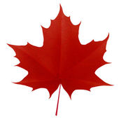 Realistic red maple leaf isolated on white background — Vector de stock
