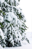 Fur-tree covered by a snow — Stock Photo