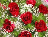 красные цветы — Стоковое фото
