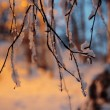Branch covered by a snow — Stock Photo