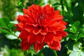 Mooie rode bloem — Stockfoto