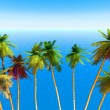 Palm on an exotic tropical beach — Stock Photo