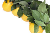 Yellow bright lemons — Stock Photo