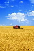 Harvester in the field — Stock Photo