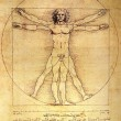 Photo of the Vitruvian Man by Leonardo Da Vinci - Stock Photo