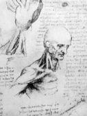 Photo of the Vitruvian Man by Leonardo Da Vinci — Stock Photo