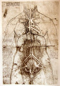 Photo of the Vitruvian Man by Leonardo Da Vinci — Zdjęcie stockowe